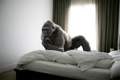 foto-gorilla-bett